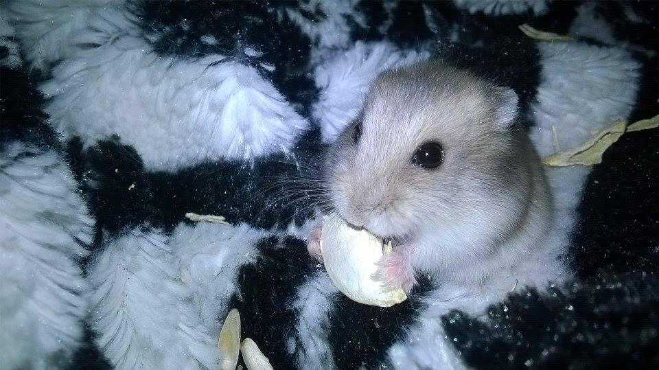 Frau_Hamster